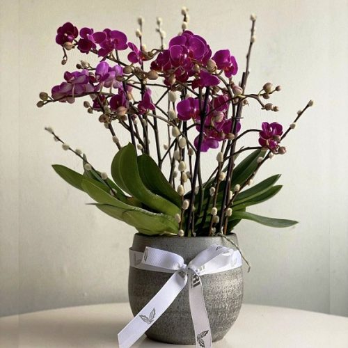 Purple Orchids by Pari Plants Bahrain Delivery