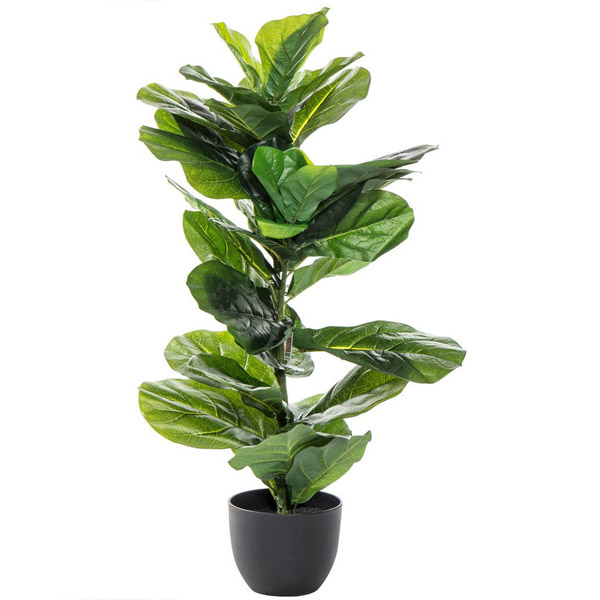Fiddle Leaf Fig By Heaven Garden Plants Delivery Bahrain